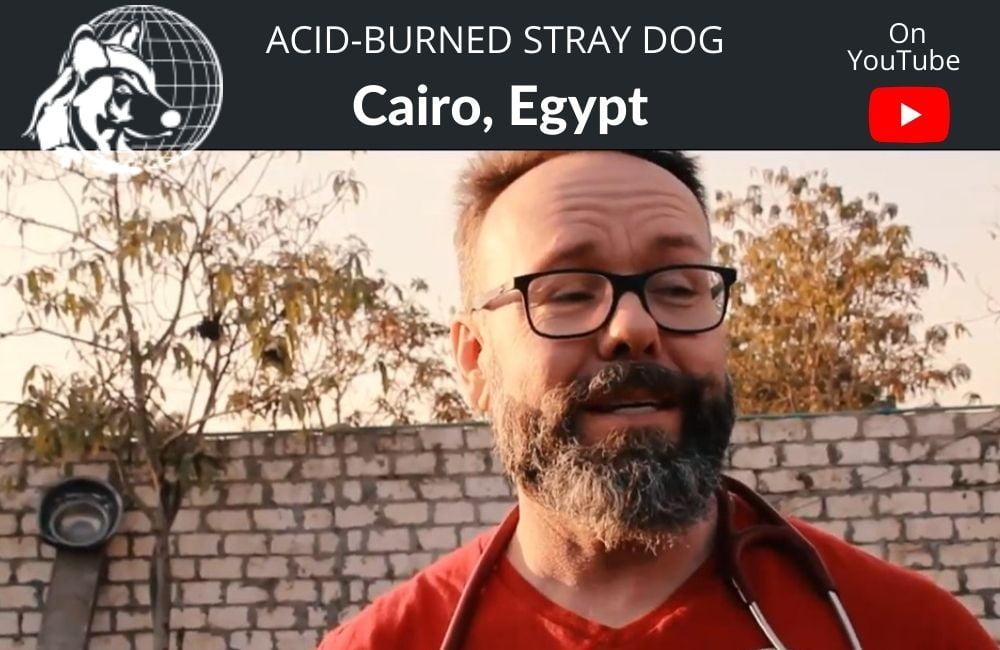 Dr. Cliff Worldwide Vet   Cairo   Acid Burned Stray Dog