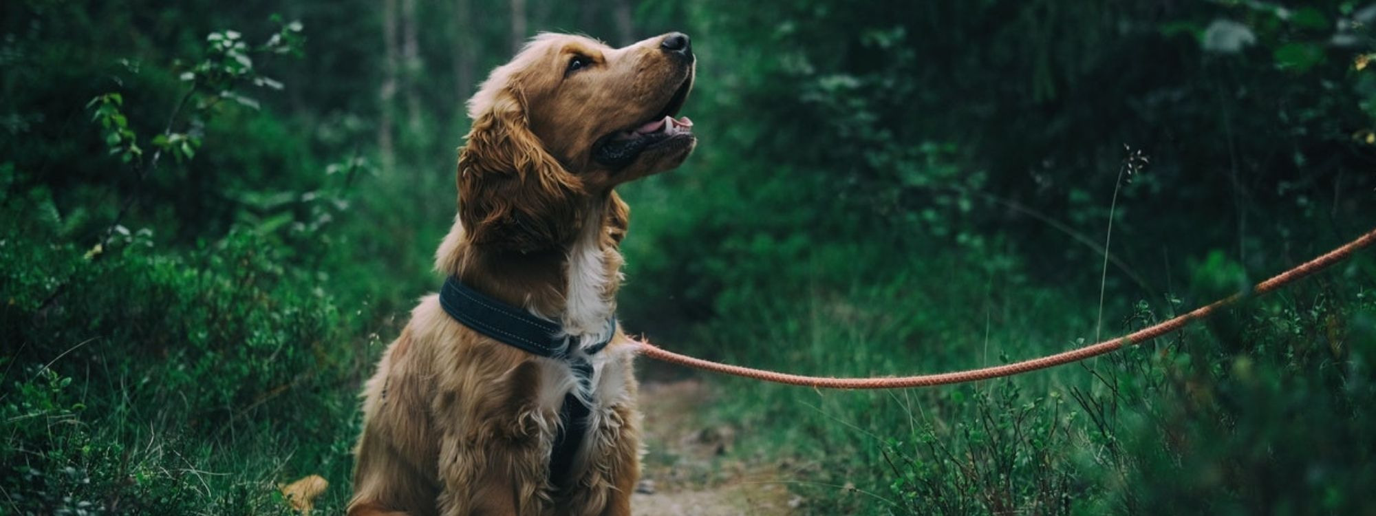 Parasite Prevention & Treatment | Wellington Veterinary Hospital