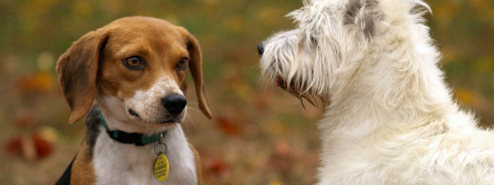 Pet Wellness Checkups