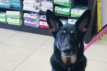 Raw food diet for pets | Wellington Veterinary Hospital