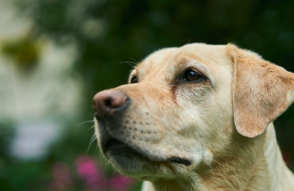 Seasonal Allergies in Dogs | Wellington Veterinary Clinic | Image by Photo by Markus Distelrath from Pexels