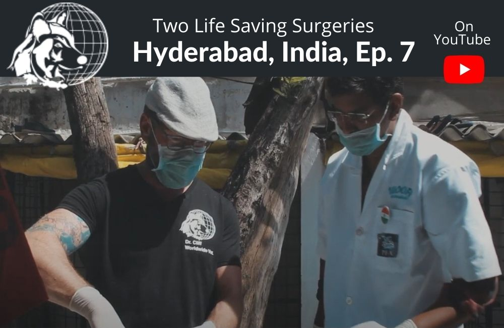 India Ep & | Dr. Cliff Worldwide Vet