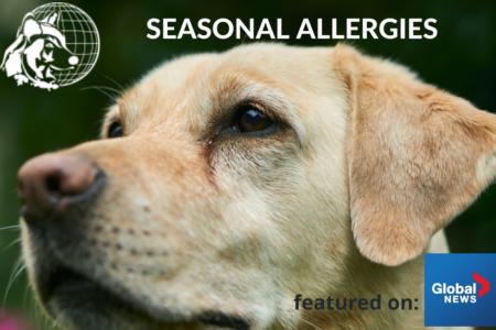 Seasonal Allergies in Pets | Dr. Cliff Worldwide Vet on Global News